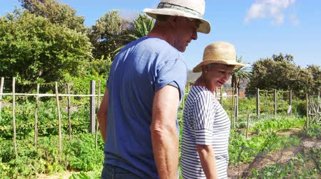 home grown : Senior Couple Checking Plants Growing On Community Allotment