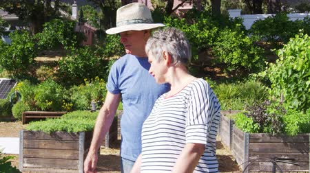 fenntartható : Senior Couple Checking Plants Growing On Community Allotment