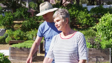 self sufficiency : Senior Couple Checking Plants Growing On Community Allotment