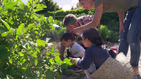 устойчивость : Family Working On Community Allotment Together