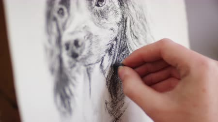 płótno : Close up of artist working on portrait of dog in charcoal - shot in slow motion Wideo