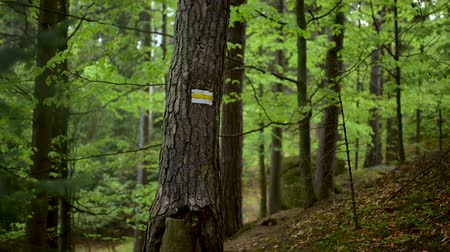 Yellow sign on a tree in the middle of the forest Dostupné videozáznamy