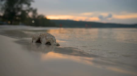 bivalve : Waves strike the Shell, beautiful sunset in the background.