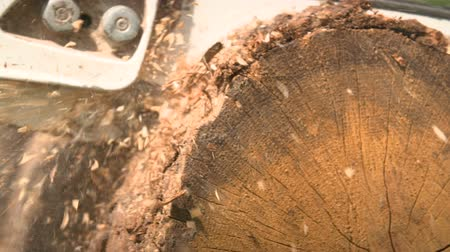 лесозаготовки : Cutting through wood with chainsaw in slow motion. Стоковые видеозаписи