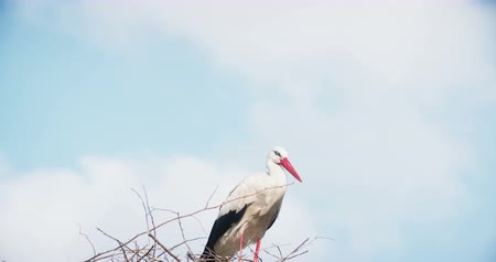 фокус : Stork in the nest in the summer. Nature background