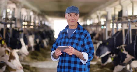 breeder : Cow breeder checking on livestock and using digital tablet