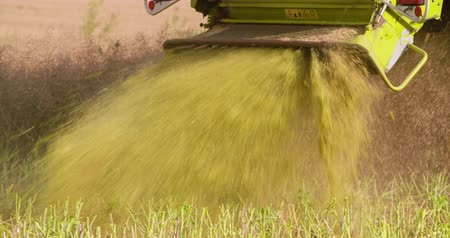 shredding : Close-up of combine harvester on field at farm