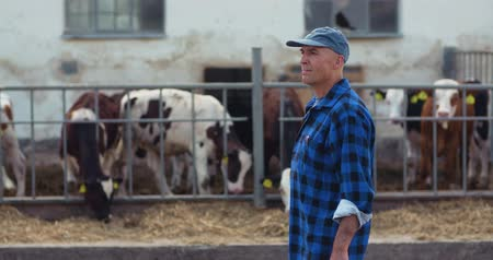býložravý : Farmer using digital tablet while looking at cows