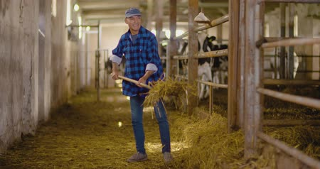 cow farm : Confident mature male farmer holding pitchfork in stable