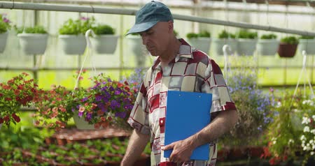 горшках : Researcher Examining Potted Plant At Greenhouse Стоковые видеозаписи
