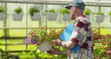 inspector : Researcher Examining Potted Plant At Greenhouse Stock Footage