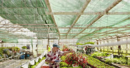 inspectie : Researcher Examining Potted Plant At Greenhouse Stockvideo