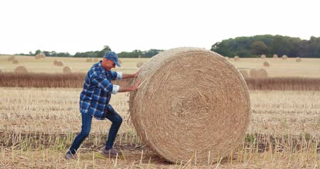 palheiro : Smiling farmer rolling hay bale and gesturing in farm