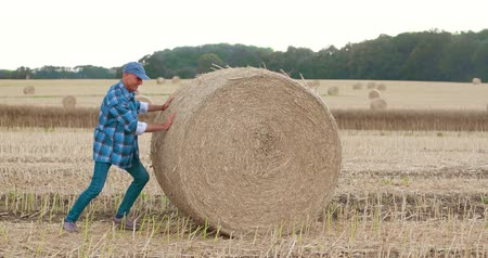 клетчатый : Smiling farmer rolling hay bale and gesturing in farm