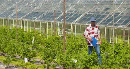 panoya : Confident male farm researcher examining and tasting blueberry on field