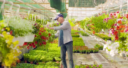 sera : Confident male gardener examining potted flower plant Stok Video