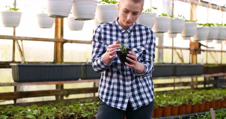 checked pattern : Young Female Botanist Examining Potted Plant