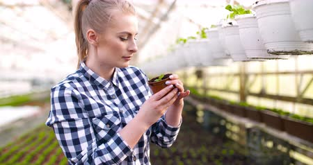 горшках : Young Female Botanist Examining Potted Plant