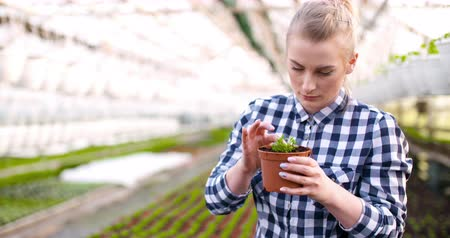environmentalist : Young Female Botanist Examining Potted Plant