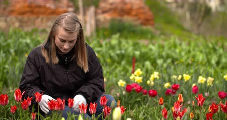 inspeção : Female Researcher Walking While Examining Tulips At Field Vídeos