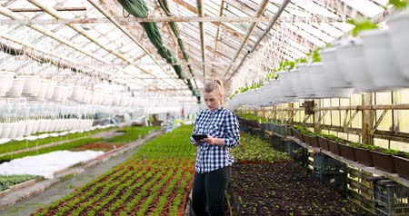 abundância : Female Botanist Using Calculator At Greenhouse