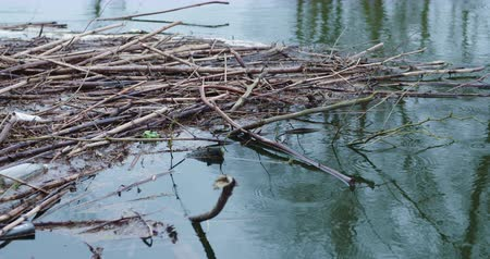 abundância : Sticks And Garbage Floating On Lake Stock Footage