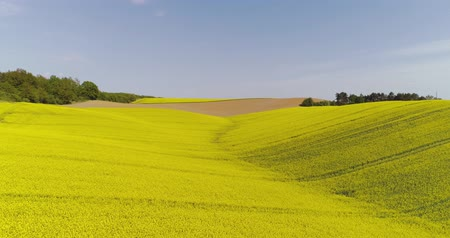 abundância : Scenic view of canola field against sky