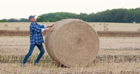 клетчатый : Farmer struggling while rolling hay bale at farm Стоковые видеозаписи