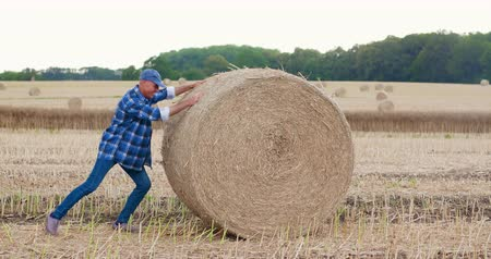 palheiro : Farmer struggling while rolling hay bale at farm Stock Footage