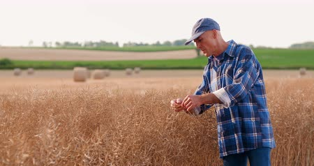 inspectie : Farmer with digital tablet analyzing crops at farm
