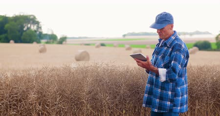 overvloed : Farmer with digital tablet analyzing crops at farm