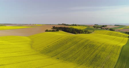 oleaginosa : Scenic view of canola field against sky
