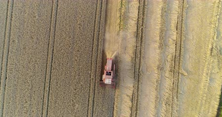 танкер : combine harvester harvesting agricultural wheat field