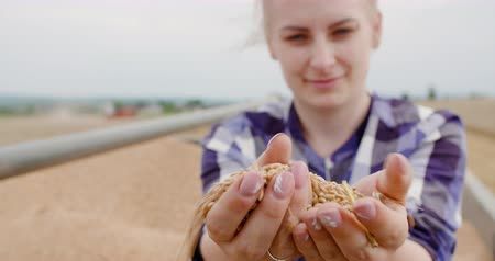 kernels : Young Female Farmer Examining Wheat Grains