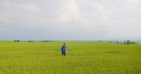 cuidadoso : farmer examining agriculture field on farm