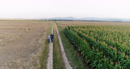 контрасты : Young Farmers Discussing At Maize Field Agriculture