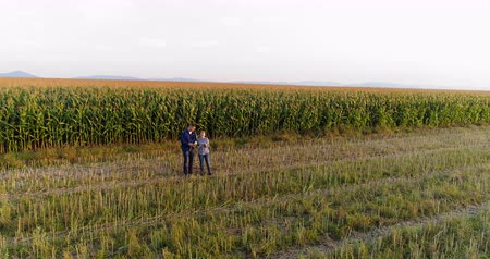 contrastes : Young Farmers Discussing At Maize Field Agriculture