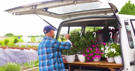 Male Farmer Loading Van Trunk With Hanging Plants Wideo