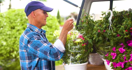 Confident male gardener examining potted flower plant Stock Footage