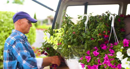 sera : Male Farmer Loading Van Trunk With Hanging Plants Stok Video