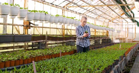 Gardener Examining flowers in Greenhouse Agriculture