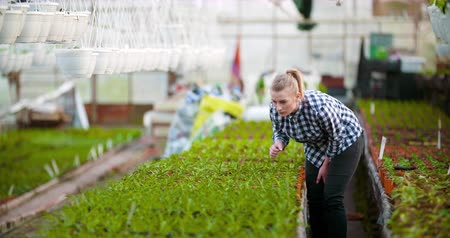 agriculture female gardener working in greenhouse