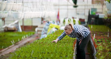 watering can : Gardener Examining flowers in Greenhouse Agriculture