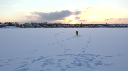 playing with a dog : Playful Dog On Frozen Lake A playful dog bringing ball on frozen lake in sunset.