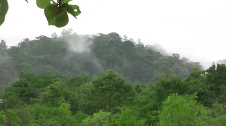 erdészet : (timelapse) Fog Rising From Tropical Jungle The time lapse video of fog rising from tropical jungle early in the morning.