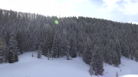 harikalar diyarı : A slow pan of the alpine forest covered in snow.