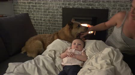 coo : Mom Baby and Dog Stock Footage