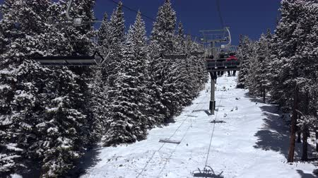 esqui : Riding Chairlift Trees Coated in Snow. Skiing at a resort encountering a ski chairlift with trees covered in fresh powder snow.