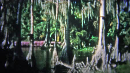demokratický : FT. LAUDERDALE, USA - 1957: Banyan tree forest before technology put undue pressure on the ecosystem.. Unique vintage 8mm film home movie professionally cleaned and captured in 4k 3840x2160 UHD resolution plus post processing including cinematic retro col