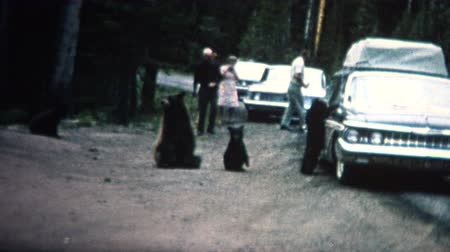 országúti : 8mm Vintage 1968 People Feeding Bears Roadside in Yellowstone Park